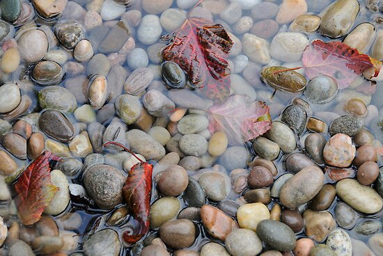 Pebbles & Leaves in Autumn Rain by Sheila Laurens