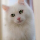 Linus, our cat by Quasebart