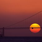 The Sun Aslo Sets by salim madjd