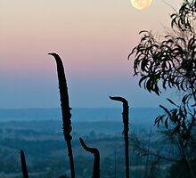 Summit Moon by Barb Leopold