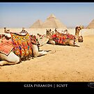{ camels in egypt } by Brooke Reynolds