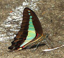 Blue Triangle Butterfly! by KiriLees