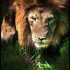 lion by ArtX