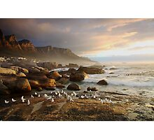 Sunset with the seagulls Photographic Print