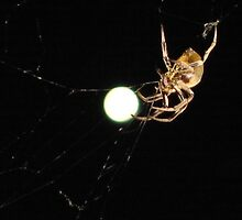 Giant spider captures supermoon by jimi9