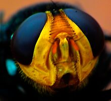 Fly Macro XI - HDR by kutayk