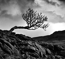 Against The Wind Mono by Jeanie
