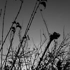 Spring silhouette by contradirony