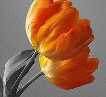 Digital Orange by Fay270