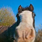 Inquisitive horse by luke-vw