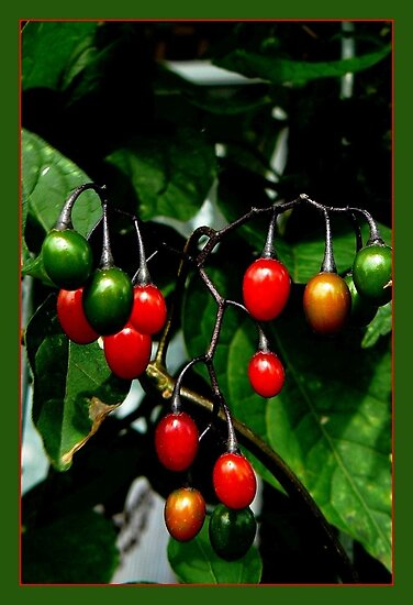 brilliant berries by LisaBeth