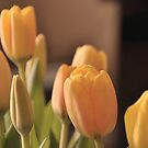 Springtime!!! by MarieG