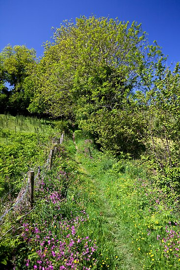 Walking to Dittisham by Kerry Dunstone