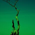 old tree by moodywalia