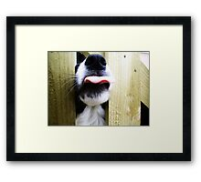 Oh Rolley Framed Print