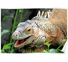 Green Iguana Poster