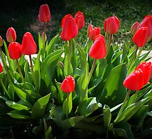 Red Tulip Bouquet by kkphoto1