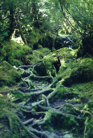 Rainforest Roots by Michael John