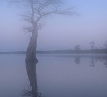 Cypress Mist by Michele Conner