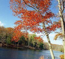 Autumn Foliage in Connecticut, New England by Alberto  DeJesus