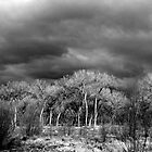 Black and White Bosque by scottmarla