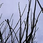 Twigs against a dull sky by contradirony