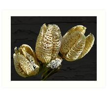Dried Lily Seed Pods Art Print