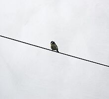 Bird on a wire by inkedsandra