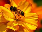 Bee Macro II - HDR by kutayk