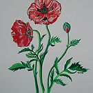 Wild Poppies by taiche