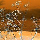 Dry arrangement by Elizabeth McPhee