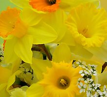 Spring Elegance by NatureGreeting Cards ©ccwri