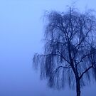 Foggy tree by contradirony