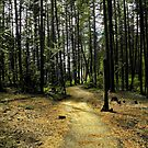 Kootenai Falls Trail by rocamiadesign