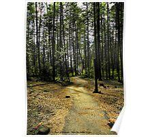 Kootenai Falls Trail Poster