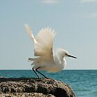The Great Egret by DorothyB