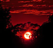 Sunrise At Allambie. Brisbane, Queensland, Australia. by Ralph de Zilva