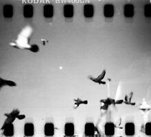 pigeons, phnom penh, cambodia by tiro