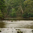 Yarra River at Kangaroo Ground by wolfmarx