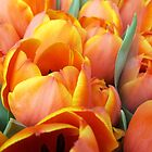 Sunkissed Tulips by rualexa