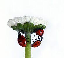 Wishing you a wonderful 2012 by Yool