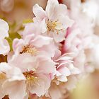 Double Cherry Blossom no. 2 by greenzinnia