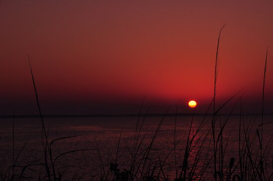 Sunrise after the Super Moon, As Is by Kim McClain Gregal