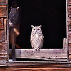 Great Horned Owls by Leland Howard