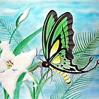 Butterflies and Lilys by Edmond  Hogge