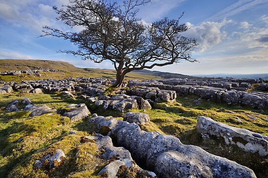 Above Langcliffe - The Yorkshire Dales by Dave Lawrance