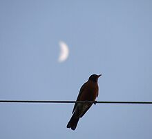 Robin on a wire with moon, Michigan 2009 by Brandon Weber