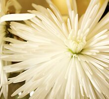 Spikey Flower Pedals by Patsy Castle