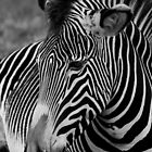 Black & White Beauty. by Mark Hughes