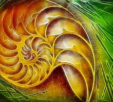 Nautilus Abstract by Susie Peek